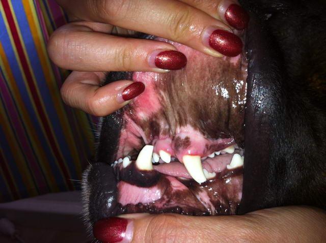 Diabolos Zähne