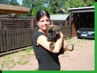 Enya von Achtern Diek Wurftag: 11.06.2012 Zuchtbuchnummer: 1239-e1-h3