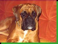Cocoline vom Brömchen Wurftag: 19.07.2008 Zuchtbuchnummer: 230998