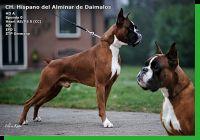 Hispano del Alminar de Daimalos Wurftag:  Zuchtbuchnummer: LOE-1951898