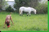 Dobby von Achtern Diek Wurftag: 30.10.2010 Zuchtbuchnummer: achtern-diek-r4
